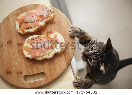 Domestic cat trying to steal fish from sandwich