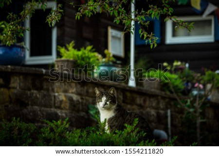 Domestic cats in the nature