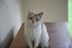 Domestic cats walk on the street. Three-fat cat. Beautiful domestic cats in the yard.