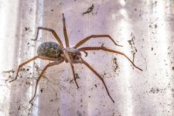 domestic house spider in bright sunshine