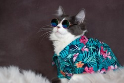 Domestic medium hair cat in Summer Tropical Flowers shirt wearing sunglasses lying and relaxing on Fur Wool Carpet. Blurred background. Relaxed domestic cat at home, indoor