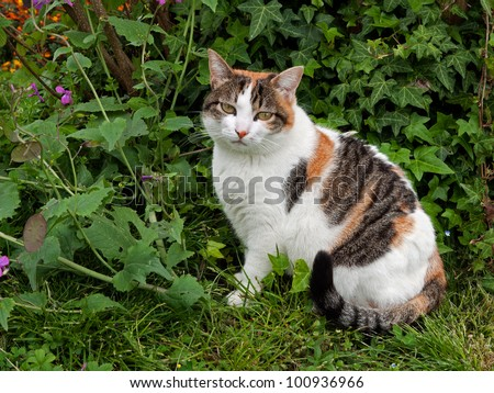 Domestic pet cat in the garden with honesty and ivy plants