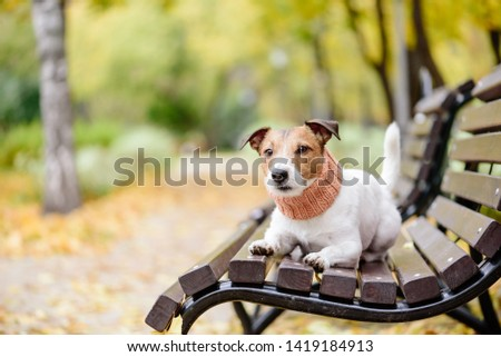 Domestic purebred pet dog off leash on bench at fall (autumn) park #1419184913