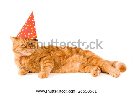 domestic red cat is having a party on white