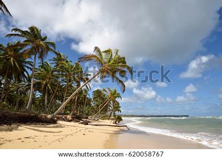 dominican republic punta cana uvero alto beach ez canvas