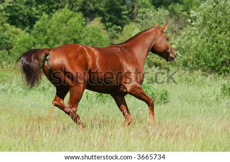 don red chestnut mare