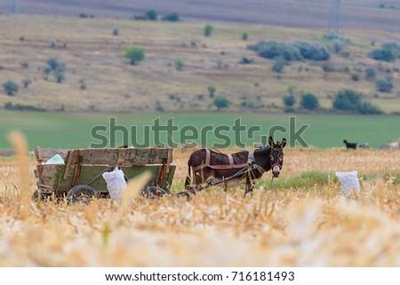 Donkey and cart on farm field