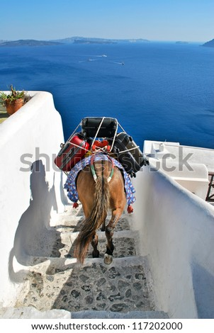 Donkey as a transportation in Santorini