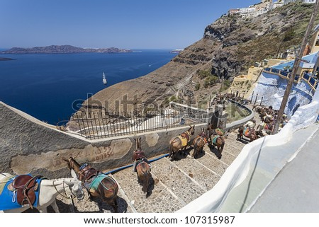 donkey at the port of Fira in Santorini, Greece