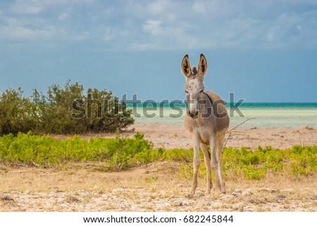 Donkey beside the beach at Cabo de la Vela #682245844