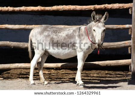 Donkey by fence in barnyard