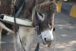 Donkey head closeup -  Animal photo