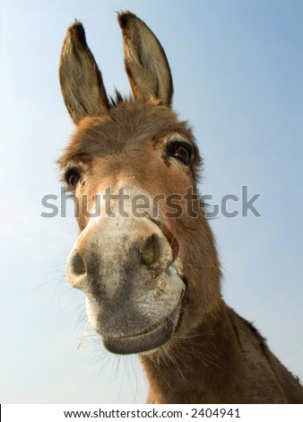 Donkey head (laughing).