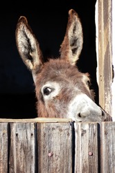 Donkey in a Stable
