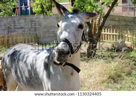 donkey in barnyard