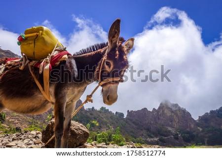 Donkey in Cova de Paul votano crater in Santo Antao island, Cape Verde, Africa Foto stock ©