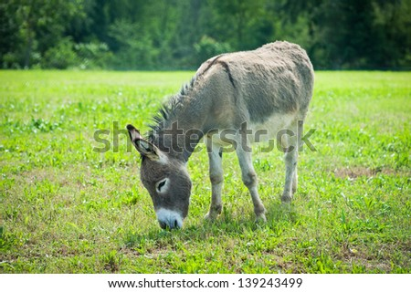 Donkey in the meadow.