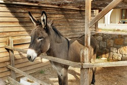 Donkey in the stable on the island of Kos