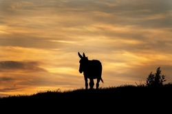 Donkey looking on sunset. Travel in Bulgaria. Shape of donkey. Animals in the Europe.