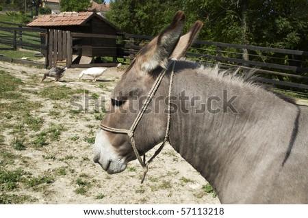 Donkey on a little farm
