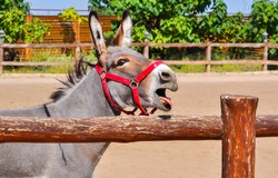 Donkey portrait at farm fence. Donkey portrait. Funny cute donkey. Donkey