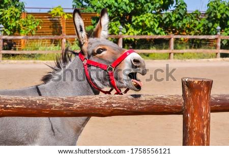 Photo of  Donkey portrait at farm fence. Donkey portrait. Funny cute donkey. Donkey