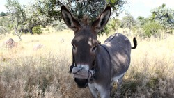 donkey resting in the shade