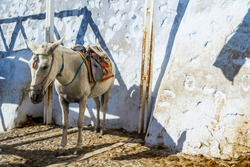 Donkey resting in the shade in Fira, Santorini