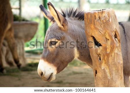 Donkey's head.