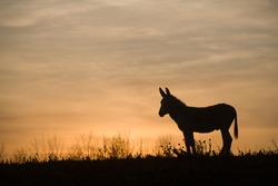 donkey silhouette against sunset clouds