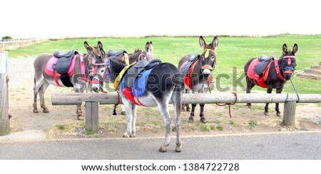 Donkey taxi colorful harnessed. Tourism concept. #1384722728