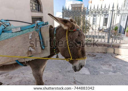 Donkey taxi in Santorini, Cyclades Islands, Greece, Europe