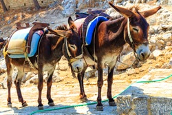 Donkey Taxis, Rhodes, Greece