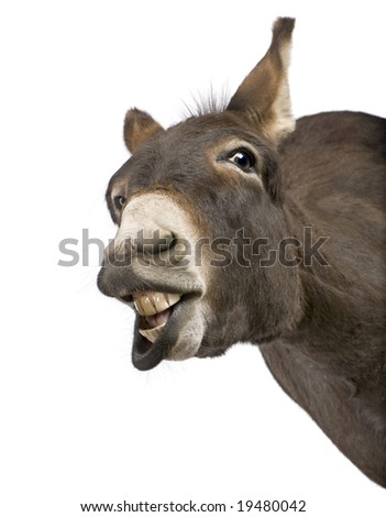 donkey ( 4 years) in front of a white background - stock photo