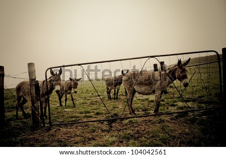 Donkeys in a camp trapped behind bobwier.