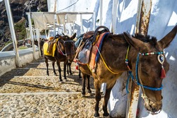 Donkeys resting in the shade in Fira, Santorini