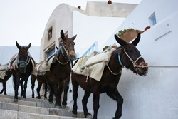 Donkeys transporting goods in Oia village on Santorini Island, Greece. View of mules carrying cargo with pack saddle on the stairs