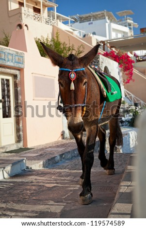 Donkeys waiting passengers at the port of Fira. Santorini Greece