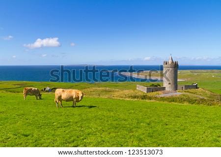 Doonagore castle with Irish cow near Doolin