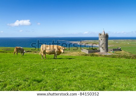 Doonagore castle with Irish cows near Doolin - Ireland