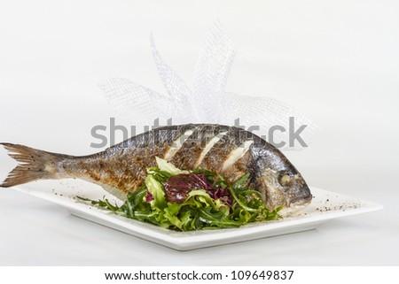 Dorada fish with salad on the white plate. Studio shot