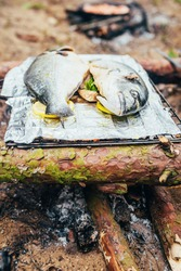 Dorado fish carcass on a forest fire - delicious tender meat on an open fire - natural food