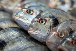 Dorado fish (gilthead bream) sold at fish market, close up