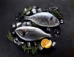Dorado fishes on the stone with lemon, rosemary  and thyme. Dorado Fish on ice. Top view.