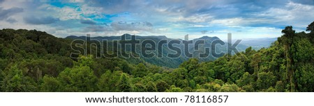 dorrigo tropical cold rainforest blue mountains australia panorama green tall trees valley
