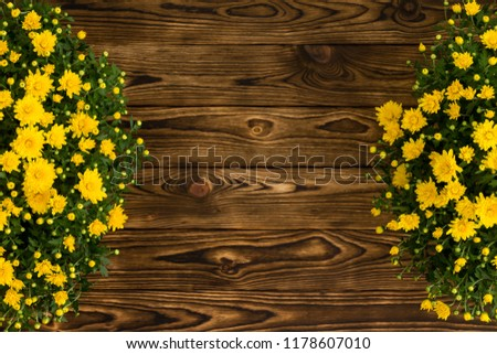 Double border of colorful yellow Mums or fall chrysanthemums in pots on a rustic wood background with copy space from above #1178607010