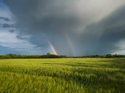 Double bright colorful rainbow in front of gloomy ominous clouds above an agricultural field planted with sunlit wheat during a windy summer evening