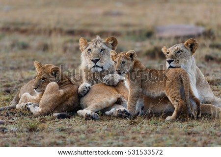 Double Cross Pride Lion family in Masai Mara, Kenya