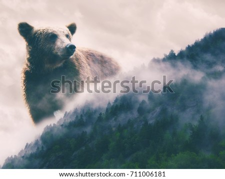 Double exposure abstract picture of nature wild watch. Bear and woods with the fog. Extreme  wilderness #711006181