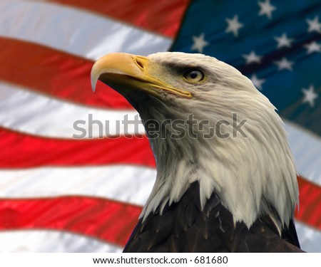 Double exposure:  Bald Eagle in the foreground with the American flag blurred in the background. - stock photo